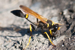 Exterminator near me | How to Get Rid of Wasp & Hornets -