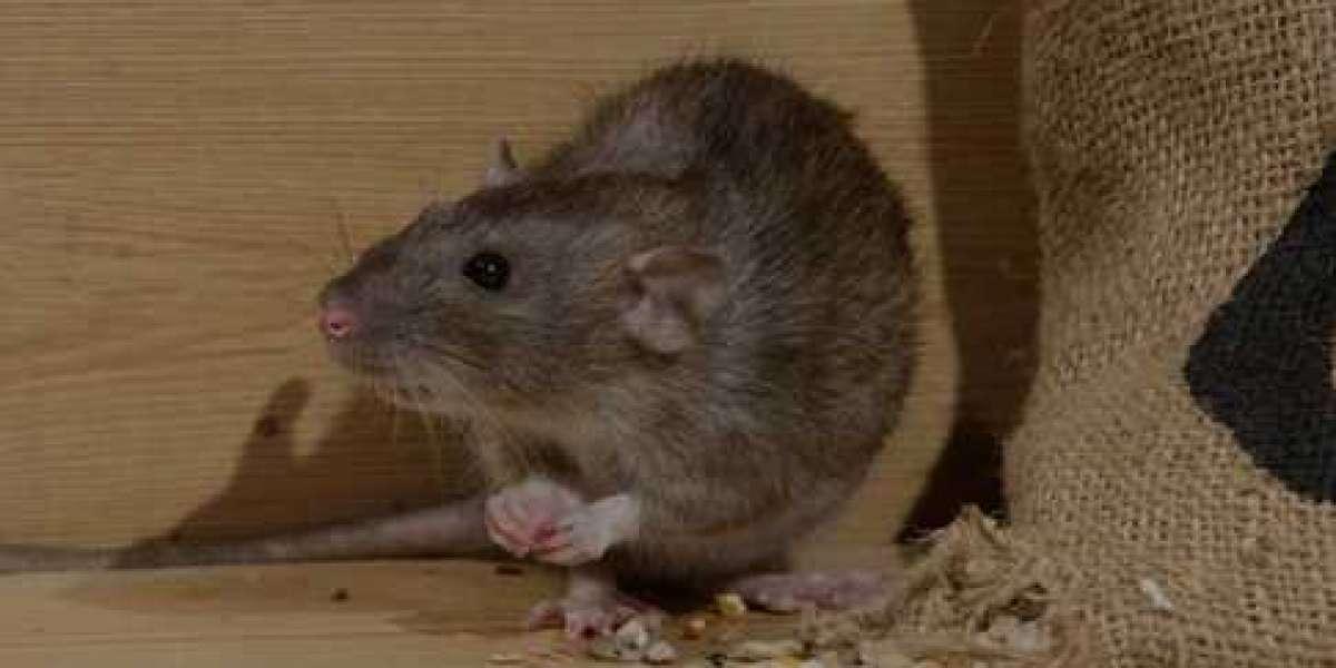 Possum Eradication